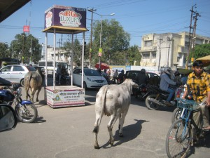 牛とサイクルリキシャー