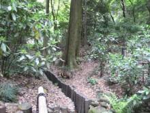 2012.05.01-005-1.00 Japan_東京_明治神宮