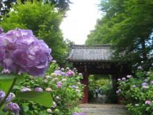 2013.06.16-006-1.00 Japan_幸田_本光寺