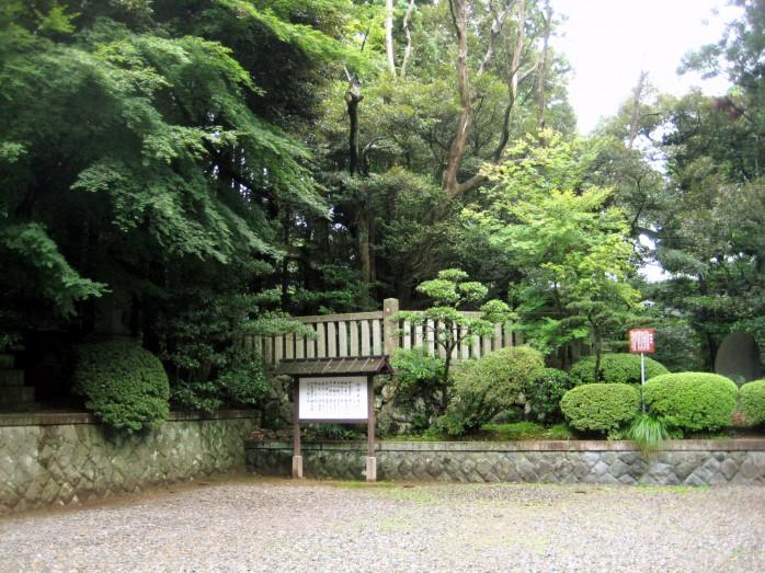 「弥彦神社 御神木 画像」の画像検索結果
