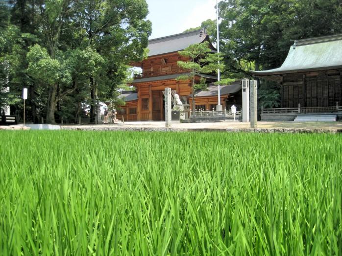 11 大山祇神社