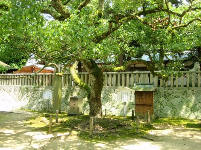 06 大山祇神社