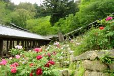 09 長谷寺