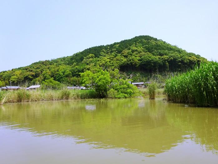 04 近江八幡の水郷めぐり