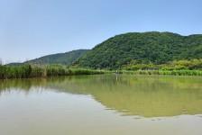 07 近江八幡の水郷めぐり