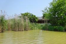 14 近江八幡の水郷めぐり