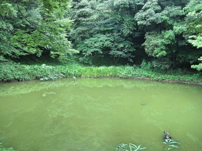 06 白兎神社_不増不滅の池