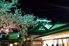 10 岡崎城と夜桜