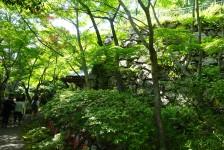 05 八幡山城の石垣