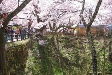 02 高遠城址公園