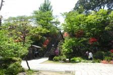 03 達磨寺