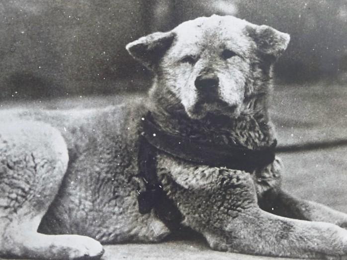 08 忠犬ハチ公の写真