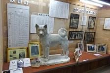 05 秋田犬会館_秋田犬博物室