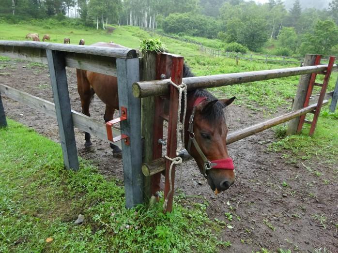 07 木曽馬の里_木曽馬