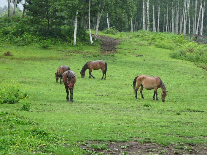 05 木曽馬の里_木曽馬